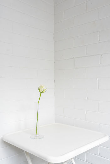 White flowers in vase against wall