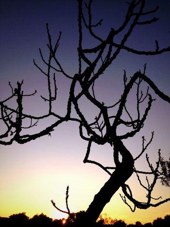 Puglia Taking Photos Tree Enjoying Life Discover Your City Life Travel EyeEm Nature Lover Nature