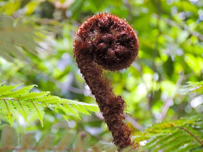 Close-up of fresh green leaf on land