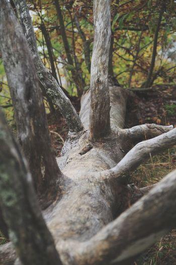 Dead tree Dead Tree Autumn🍁🍁🍁 Leaves Autumn Colors Autumn Leaves Autumn The Great Outdoors - 2017 EyeEm Awards