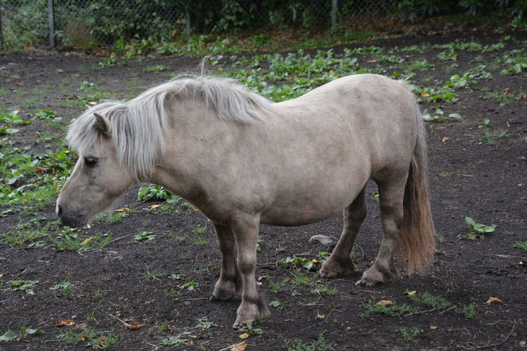 Animal Animal Themes Animal Wildlife Day Domestic Domestic Animals Field Herbivorous Horse Land Livestock Mammal Nature No People One Animal Outdoors Pets Plant Profile View Side View Standing Vertebrate