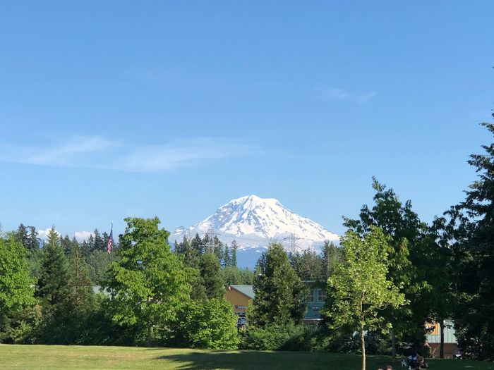 Snow Mount Rainier Washington State Washington Tree Plant Sky Nature Day Architecture Built Structure No People Beauty In Nature Mountain Cloud - Sky Growth Blue Building Exterior Outdoors Tranquility Scenics - Nature Snowcapped Mountain Travel Destinations