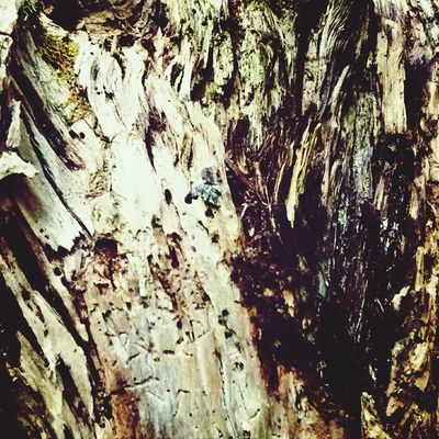 Bark, Series 1.5