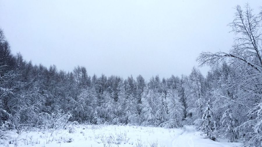 Trees on snowcapped field during winter