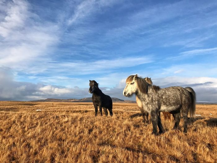 Hey horsey Sky Cloud - Sky Mammal Animal Themes Field Landscape Nature Outdoors Domestic Animals No People Day Livestock Scenics Grass Beauty In Nature horse Horses