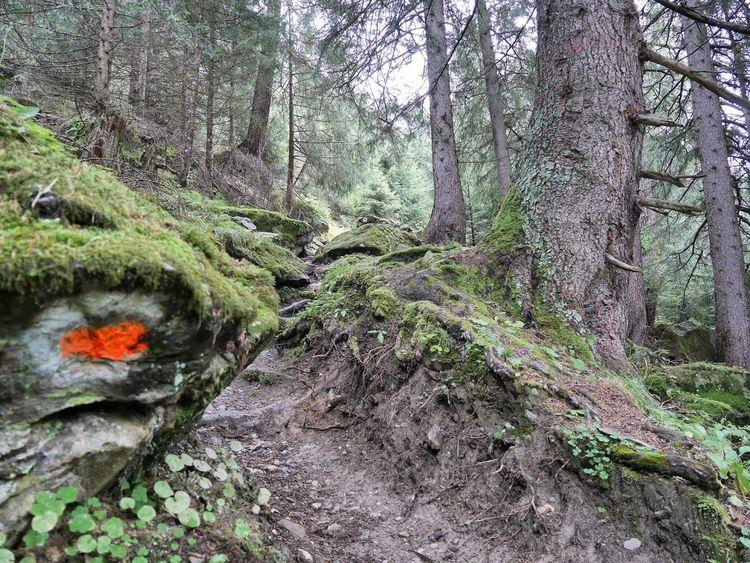 Spooky Forrest Forrest Trail Waldsteig Waldweg