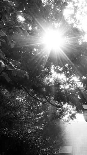 Sunbeam between roof and tree nature 16X9 BnW Spring Atmosphere Star-sunbeam Brightly Lit Roof And Light Sunlight Branch Silhouette 16x9photography Black And White Photography