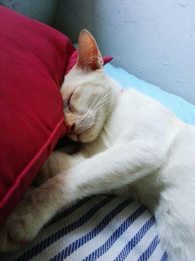 😴😴😴 Indoors  Pets Domestic Cat
