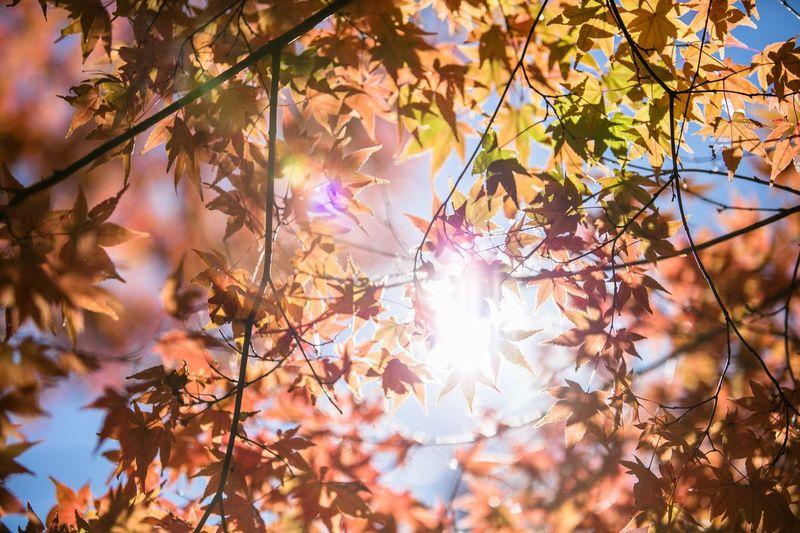 Trees against bright sun
