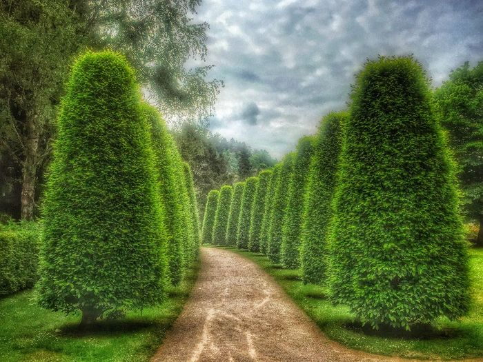 🌳🌳🌳 Trees Green Landscape_Collection Tadaa Community EyeEm Nature Lover EyeEm Best Shots Daswasichsehe😊