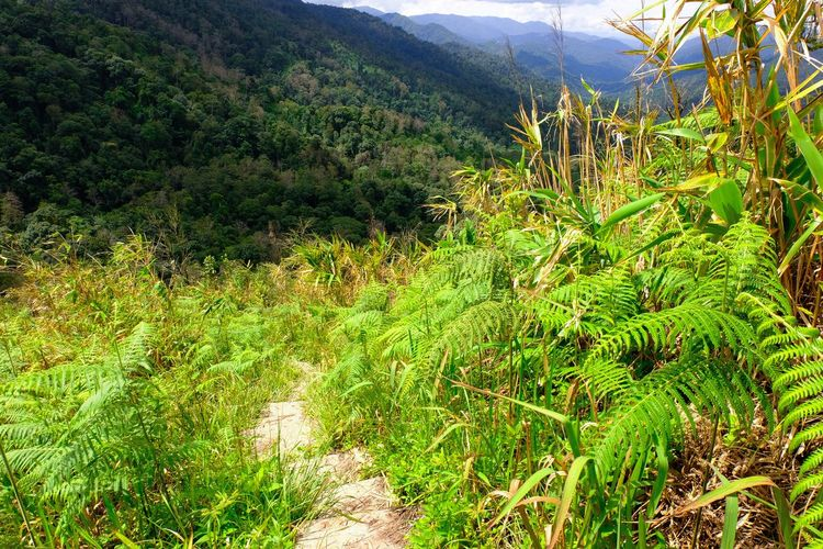 Hiking Hiking Tree Mountain Forest Grass Green Color Plant Landscape Backpack Hiker Mountain Climbing Trail