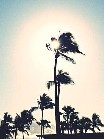 Springbreak2014 Hawaii Vacation