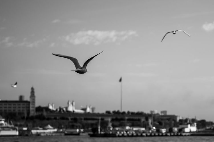 Bird Flying Animals In The Wild Spread Wings Animal Themes Animal Wildlife Seagull Mid-air Flock Of Birds Motion No People Sea Bird Day Sky Outdoors Istanbul Turkey Nature Harbor Water