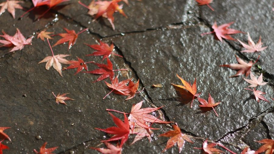 High Angle View Of Autumn Leaves On Wet Footpath