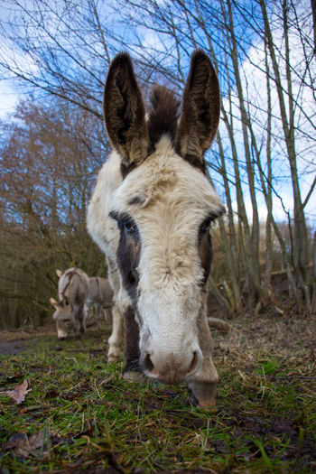 Nature Animal Animal Themes Beauty In Nature Close-up Domestic Animals Donkey Donkey Looking At Camera Eyyem Nature Lover Livestock No People Outdoors