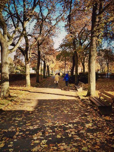 Falling Leaves Yellow Autumn Path Offenbach Am Main Germany Tree Iamonmywaytoeverywhere