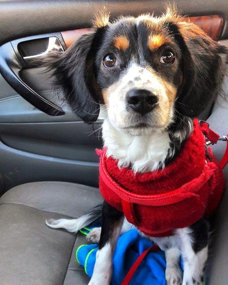 Portrait of dog sitting in car