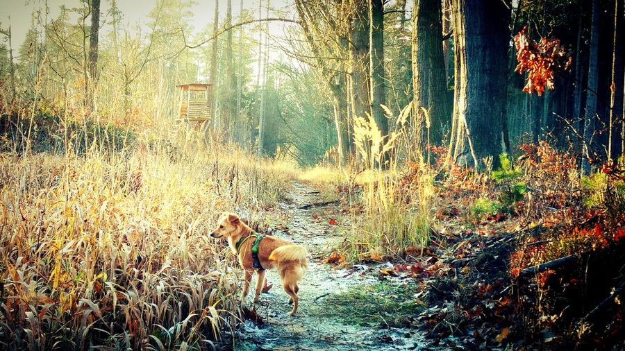 View of dog on field in forest