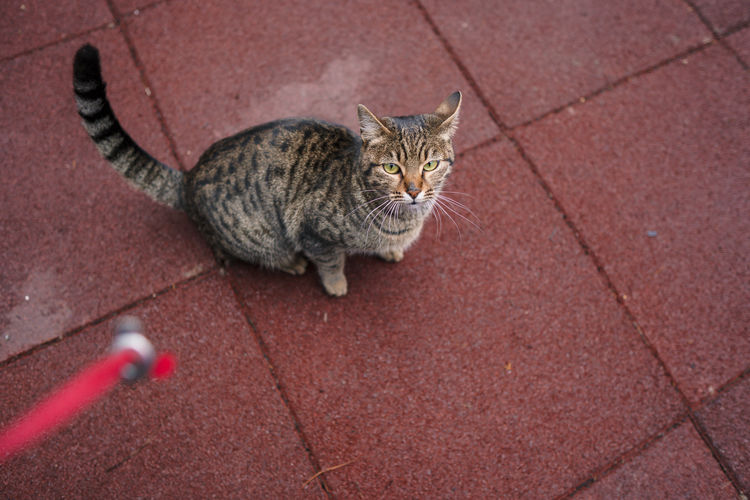 High angle view of tabby on footpath