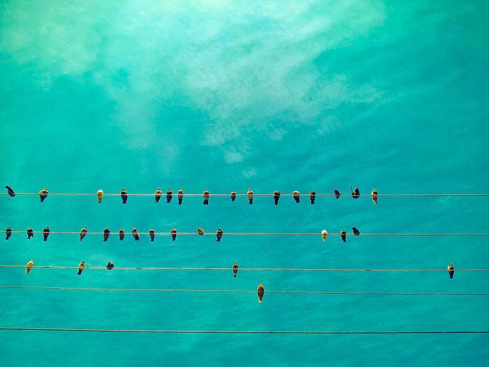 Urban Birds Animals In The City Bird Blue Nature Sky Urban
