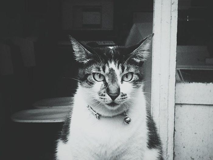 B&w B&w Street Photography Cat