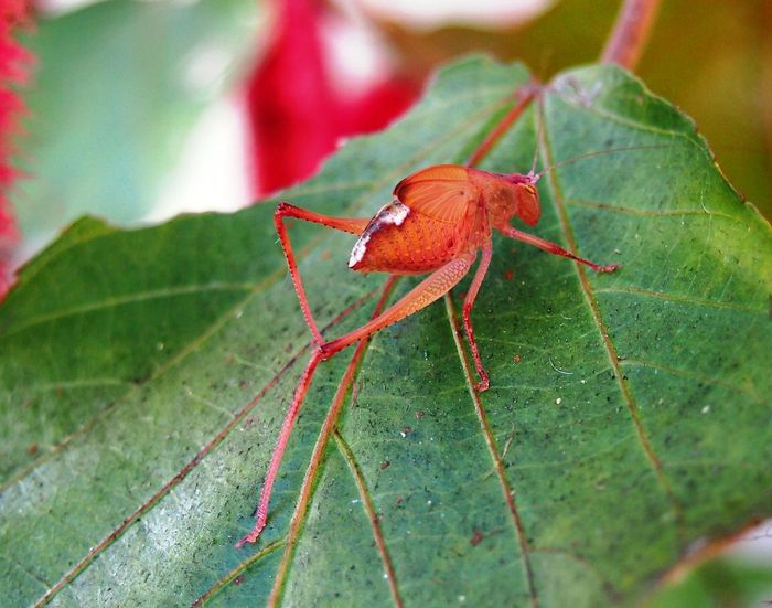 Bug Close-up Insect Orange Insect Tropical Wildlife