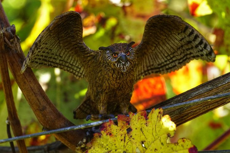 Outdoors Animals In The Wild Animal Wildlife Owl Art Schleich Tiere Schleich Animals Children Toys
