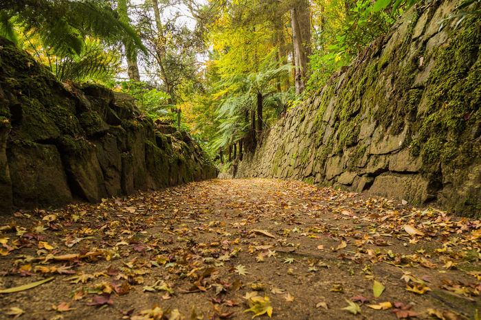 Alfred Nicholas Gardens Autumn Forest Leaves Nature Outdoors Path