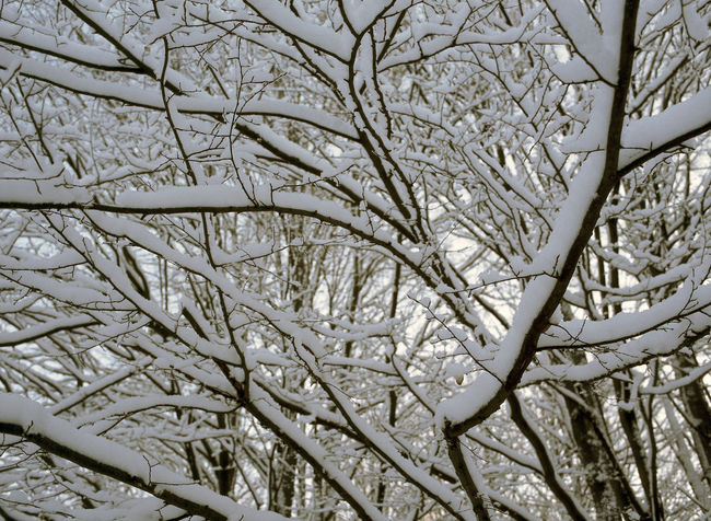 Bare Tree Branch Cold Cold Temperature Day Nature Snow Snow Branches Suwalszczyzna Tree Winter Winter