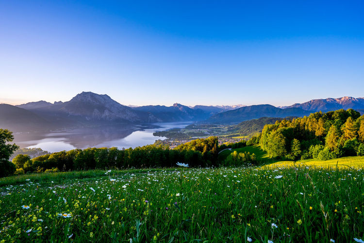 Austria EyeEm Best Shots EyeEm Nature Lover Gmundnerberg Travel Beauty In Nature Clear Sky Environment Field Green Color Growth Idyllic Land Landscape Mountain Mountain Range Nature Non-urban Scene Plant Scenics - Nature Sky Tranquil Scene Tranquility Traunsee Tree