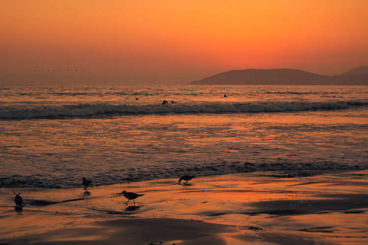 Beach Photography Pismo Beach Sunset Silhouettes Water Reflections Animal Themes Animals In The Wild Beach Beauty In Nature Bird Birds Day Mammal Mountain Nature No People Orange Color Outdoors Scenics Sea Sky Sunset Tranquil Scene Tranquility Water Waterfront