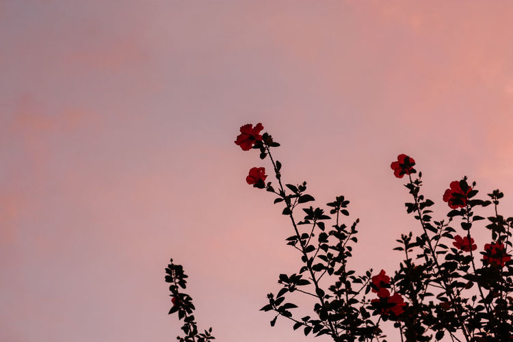 Low angle view of flowering plant against sky during sunset