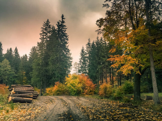 Autumn days Autumn Colors Best EyeEm Shot EyeEm Nature Lover EyeEm Gallery Forest Path Landscape_Collection Leafs Lost In The Landscape Poland Poland Is Beautiful Travel Photography Autumn Awesome Beauty In Nature Fog Forest Forest Photography Landscape Landscape_photography Leafs Photography Naturelovers Sky Tranquil Scene Travel The World Tree