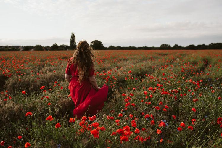 Rear view of woman by poppy field against sky