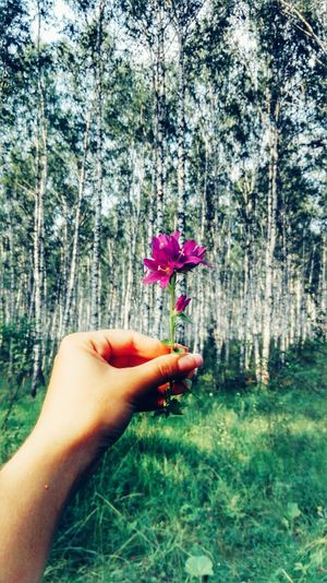 💜💜💜 Nature Flowers Forest Life Clean Air