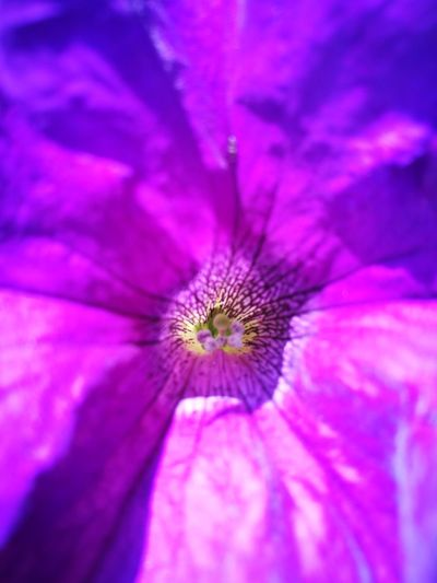 Flower Purple Flower Head Petal Nature Beauty In Nature Pink Color Fragility Close-up No People Growth Outdoors Day Freshness