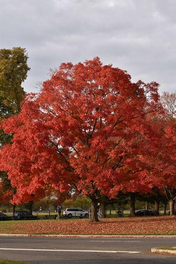 #landscape #nature #photography Autumn Lush Foliage Nature Nature_collection #eyeemnaturelover #nature Outdoors Tree Trees #leaves
