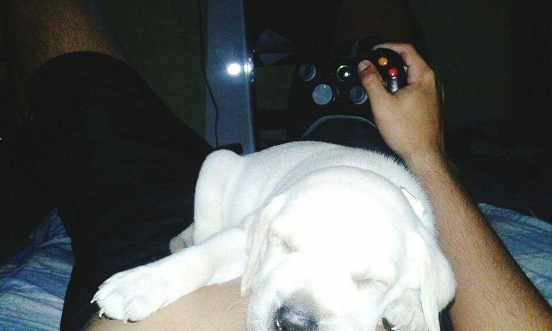 Xbox 360 Withmydog  Relaxing ;)