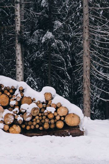 Stack of logs in forest during winter
