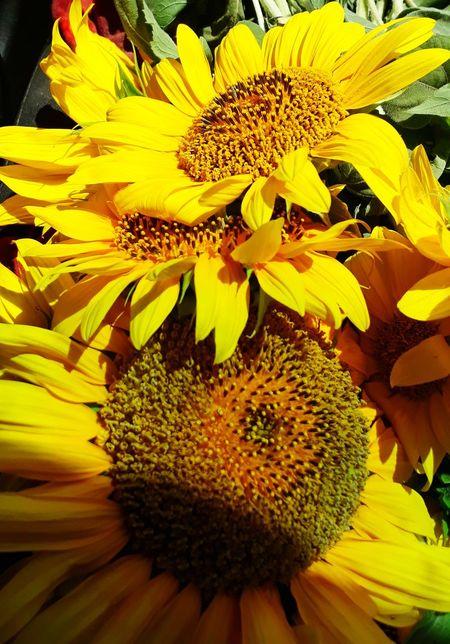 Flower Head Flower Yellow Sunflower Petal Pollen Stamen Close-up Plant Blooming