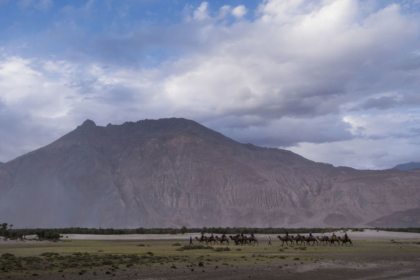 Double Humped camel safari at Hunder, Nubra Valley Animal Themes Beauty In Nature Camel Cloud - Sky Day Double Hump Camels Ladakh Landscape Mammal Mountain Mountain Range Nature NubraValley Outdoors Scenics Sky Tourists Travel Breathing Space Lost In The Landscape