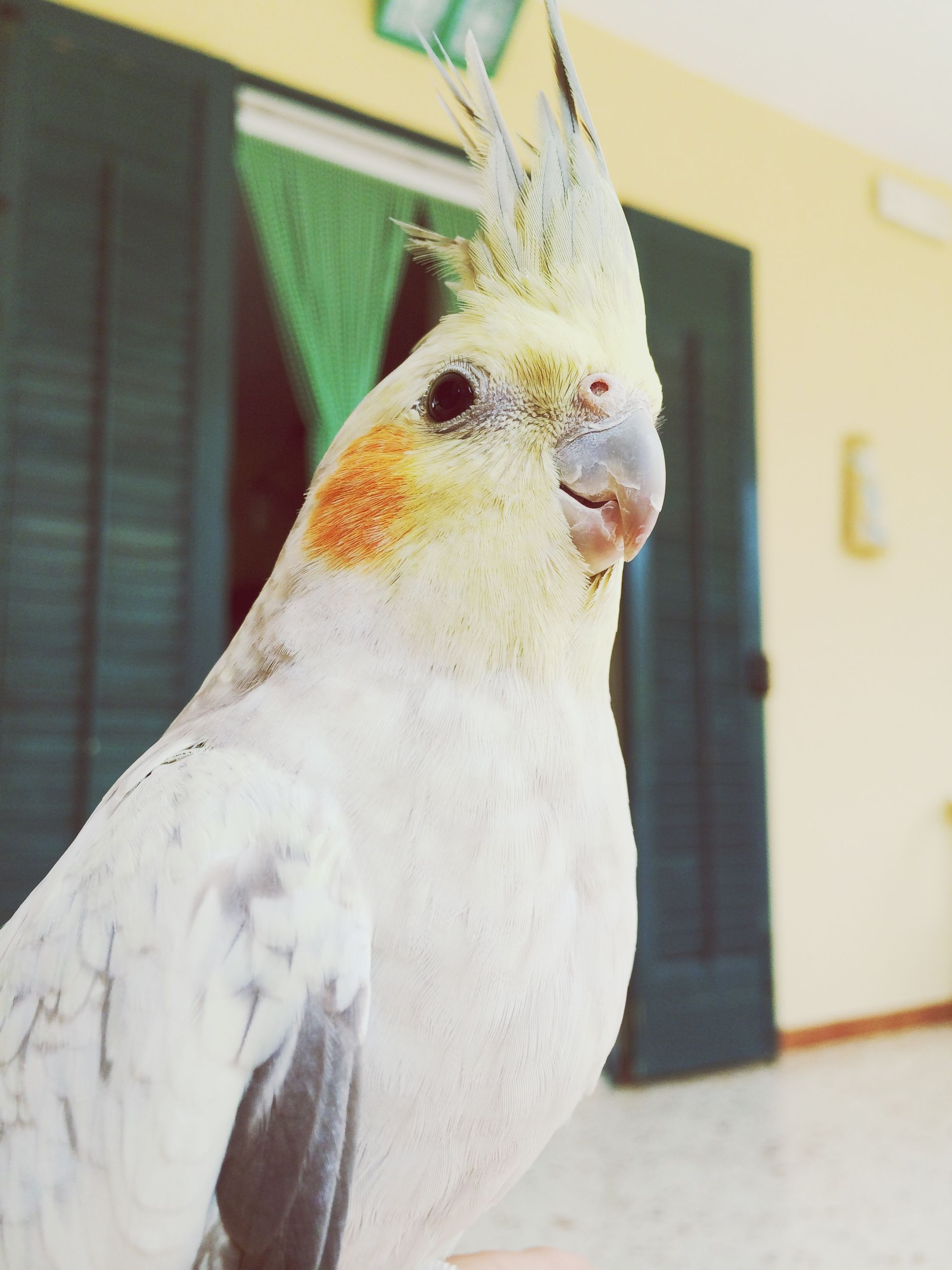 animal themes, one animal, bird, animals in the wild, wildlife, focus on foreground, close-up, animal head, beak, indoors, perching, white color, built structure, no people, day, zoology, looking away, domestic animals, architecture
