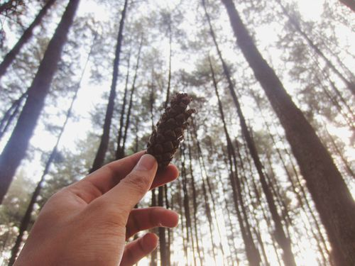 Finding New Frontiers Exploring New Ground ExploreEverything Fresh On Eyeem  Mandatory Pine Forest shot. Lol. Human Hand Outdoors Nature Pine Cone Pine Trees Exploration Explore Trying New Things Adventure at Gunung Pancar Bogor, Indonesia