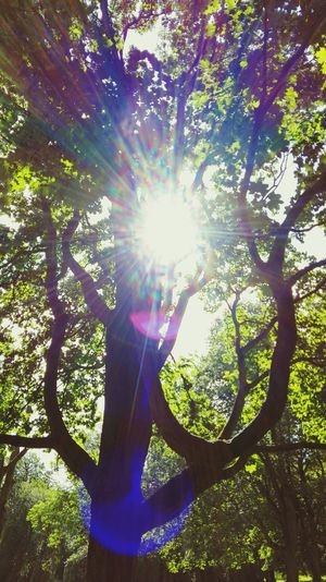 Taking Photos Check This Out TreePorn Tree_collection  Evening Sun Essence Of Summer See What I See How's The Weather Today? Springtime Spring 2016 June 2016 The Places I've Been Today Nordpark Green Green Green!  Sun Green Leaves Enjoying Life Take A Walk Silhouettes