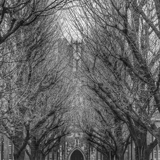 Monochrome Blackandwhite Black And White Cityscapes Streetphoto_bw Architecture_bw Trees TreePorn Walking Around Tokyo,Japan