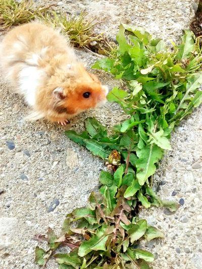 Hamster Hamster Love My Hamster Hamstergram 💗 First Eyeem Photo