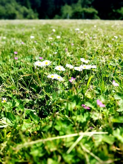 Flower Nature Beauty In Nature Plant GrowthGreen Color Day No People Outdoors Freshness Grass Close-up Green Park Fragility The Great Outdoors - 2017 EyeEm Awards