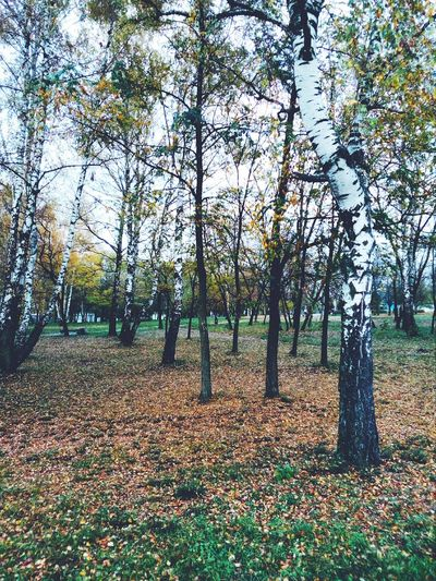 Autumn garden Tree Day Outdoors Growth No People Nature Grass Beauty In Nature Landscape Sky First Eyeem Photo