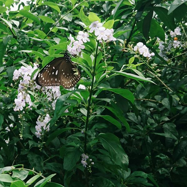 Beauty in nature Butterfly