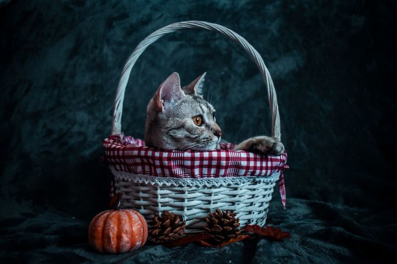 Cat sitting in basket